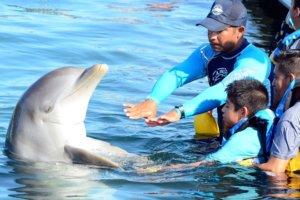 ¿Estás listo para nadar con delfines en Los Cabos?