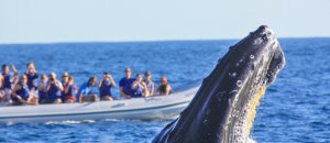 Whale watching, Los Cabos