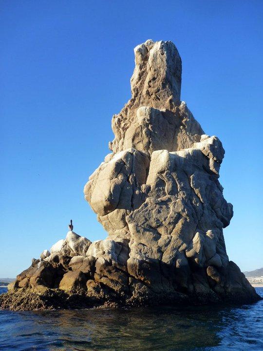 Roca Pelícano Cabo San Lucas