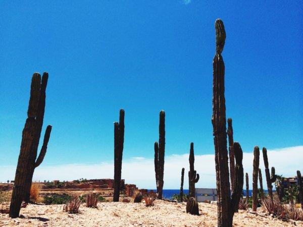 Desierto LC
