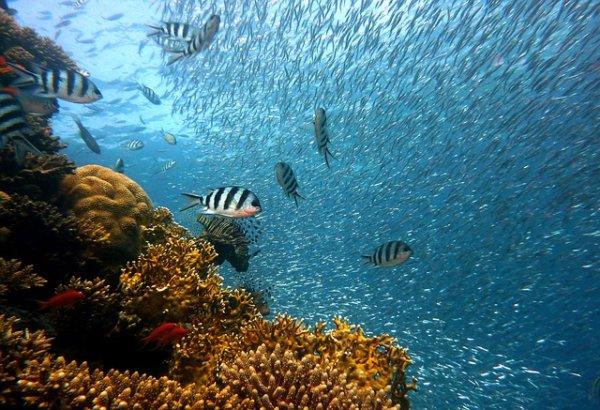 peces mar Cortés snorkel