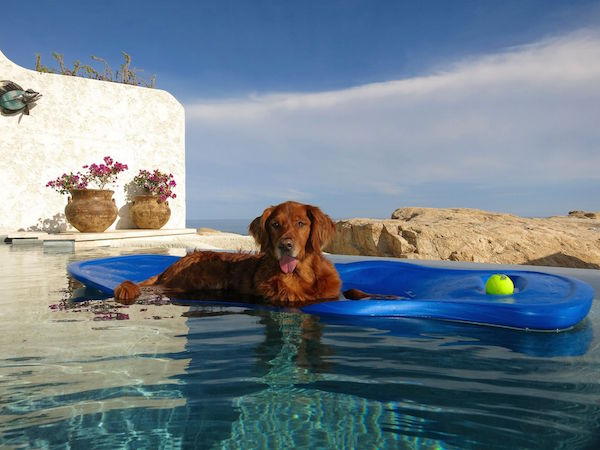 Pets are treated like VIP's in Ventanas al Paraíso